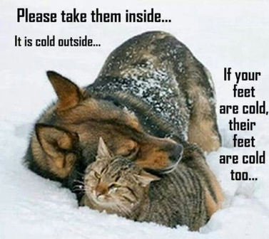 Pets in Cold