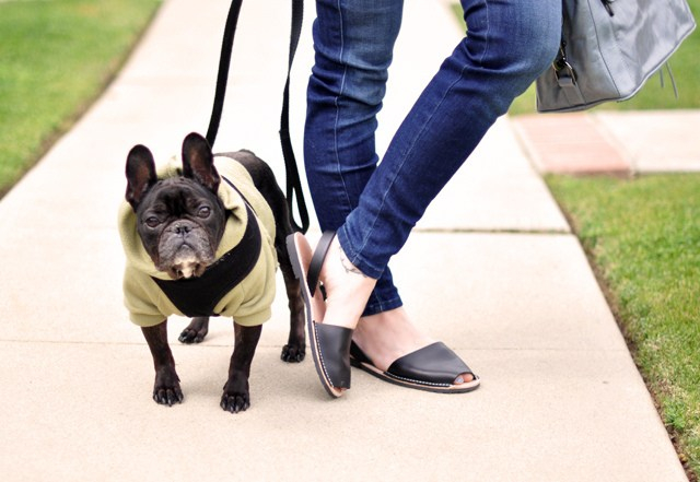 Frenchie on Leash